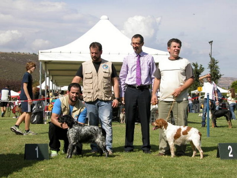 Best Of Breed Inca Bounas Progress