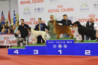 INCA BOUNAS PROGRESS,CAC-CACIB-BOB-4oBOG